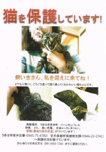 保護猫情報2014.11.24