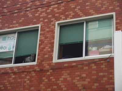 ちーの窓①