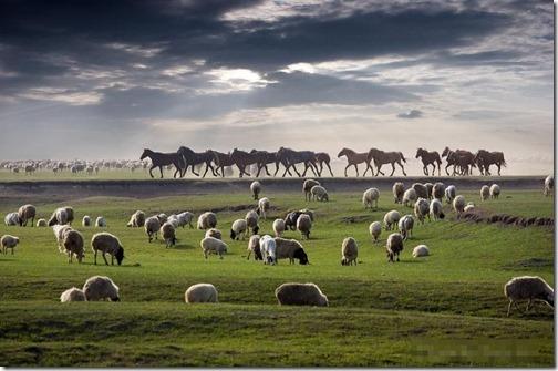 【世界の快道でイク!;モンゴル国(Mongolia)編】緑の草原を渡る風の様なキミに。Sheep
