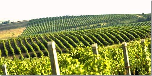 28【世界の射精から;モルドバ共和国編】風と水の流れに育まれたワインの様な君へ、天使の分け前を君にワイン畑