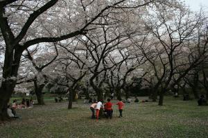 201205sakura3.jpg