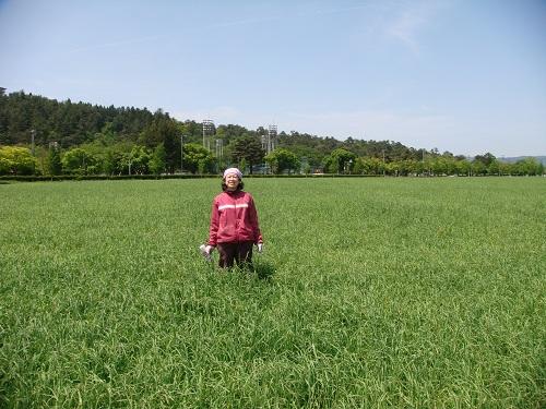 2012牧草地にて-5月-