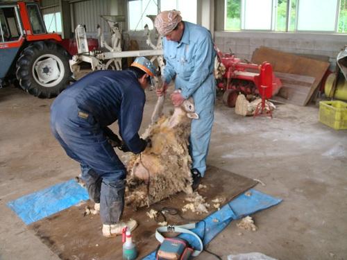 2012毛刈り(圧縮