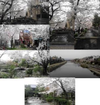 sakurasakurasakurasakura888888888888888.jpg