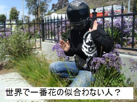 5-12 flower bel 2