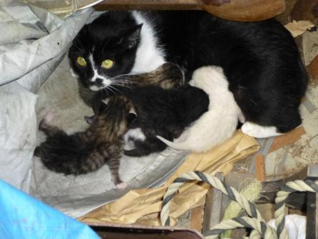10-4 CATS
