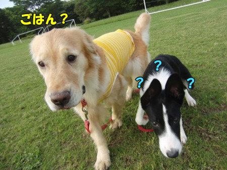 CIMG0316_20120627095721.jpg