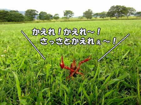 CIMG0318_20120627094134.jpg