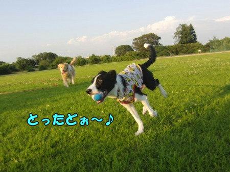 CIMG0390_20120702104107.jpg