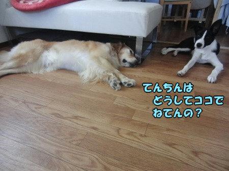 CIMG0495_20120705205931.jpg
