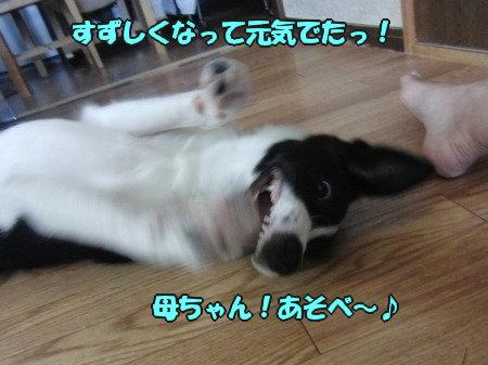 CIMG0504_20120705210114.jpg