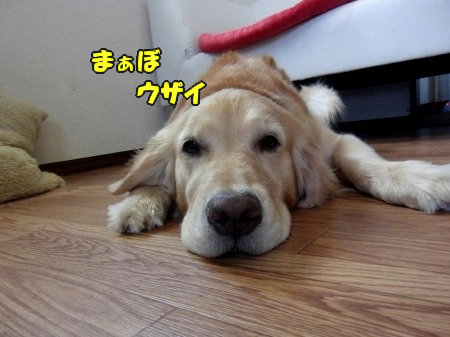 CIMG0506_20120705210113.jpg