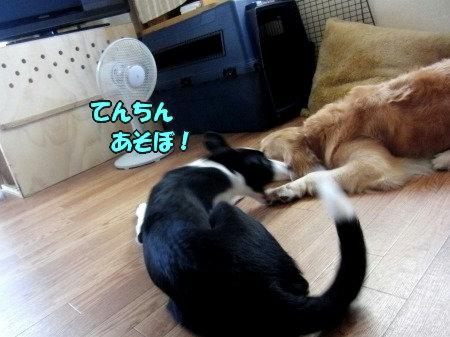 CIMG0507_20120705210113.jpg