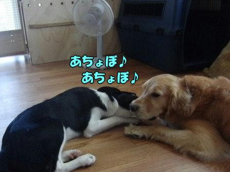 CIMG0508_20120705210113.jpg