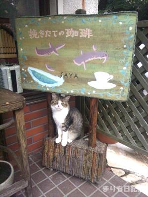 scafe120818_01.jpg