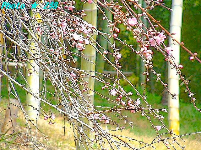 04-Haru020.jpg