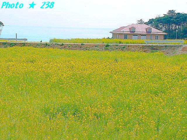04-Haru062.jpg