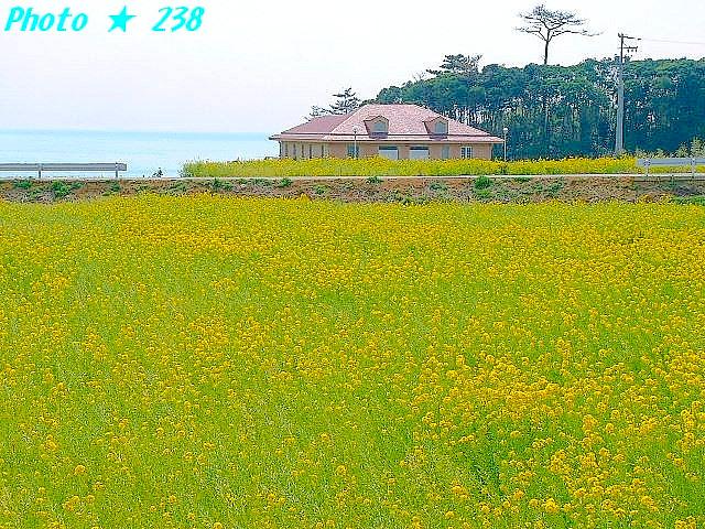 04-Haru063.jpg