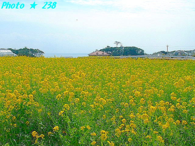 04-Haru065.jpg