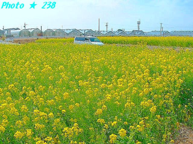 04-Haru066.jpg