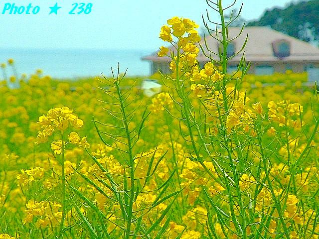04-Haru069.jpg