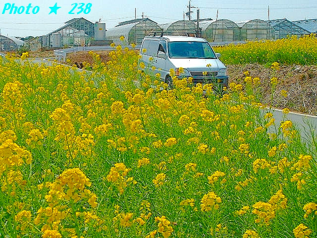 04-Haru070.jpg