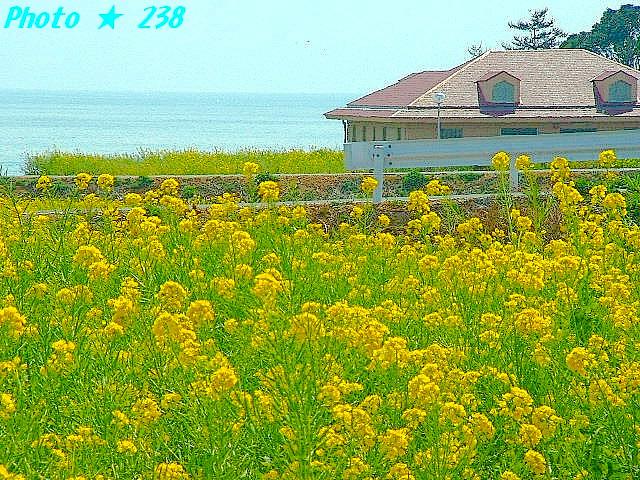 04-Haru073.jpg