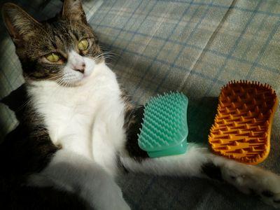 猫毛それぞれ