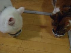 猫鰹節食べる