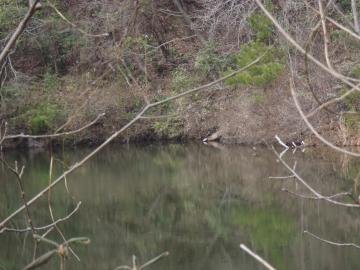 ドンデン池亀