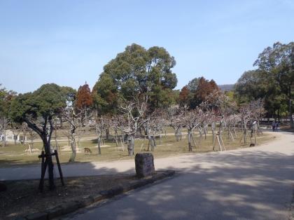 3gatu8kahiroba.jpg