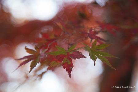 20121202-_MG_4792.jpg