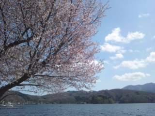 20120501 伝九郎の桜