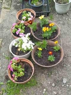 20120509 花を植えた