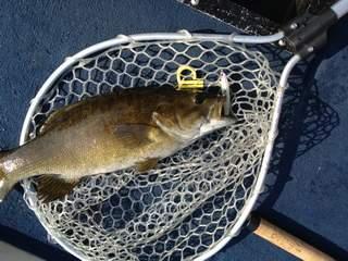 20120527 ベントミノーで釣れた