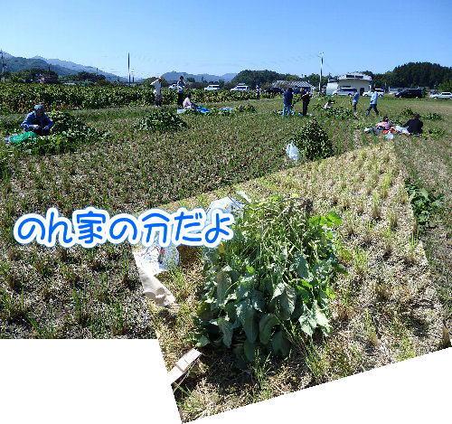 2014・10・18黒枝豆獲り