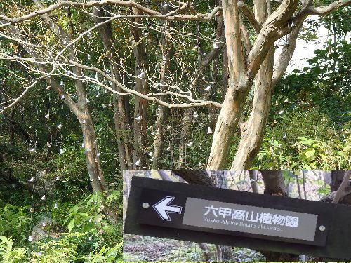 2014・10・26六甲山オルゴール館6