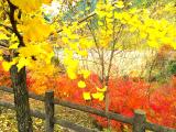 写真-2013-11-24-15-50-21