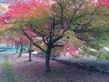 写真-2013-11-24-15-41-03