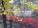 写真-2013-11-24-15-48-59