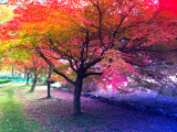 写真-2013-11-26-10-29-36