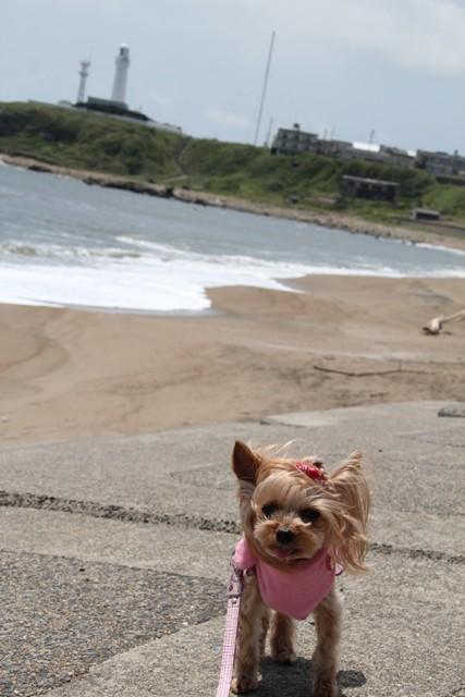 風がね怖いの