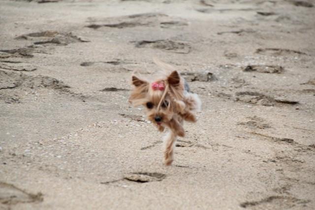 大きな穴が怖くって変な走り方。。。笑