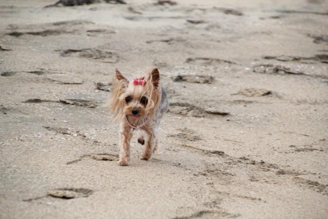 砂浜って楽しいんだね