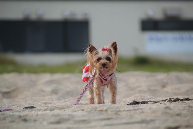 砂浜を走る1