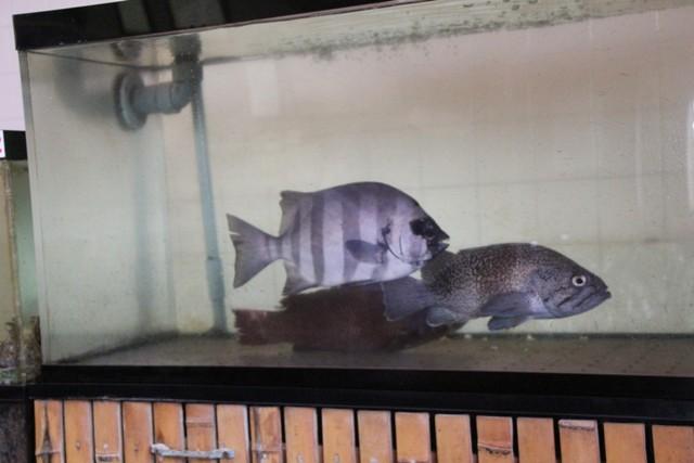 魚が泳いでいる水槽を見ながら