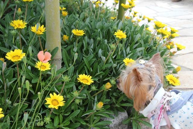 黄色のお花も