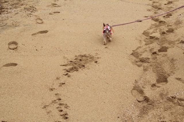 パパにリクエストしてノンたんの足跡撮ってもらいました