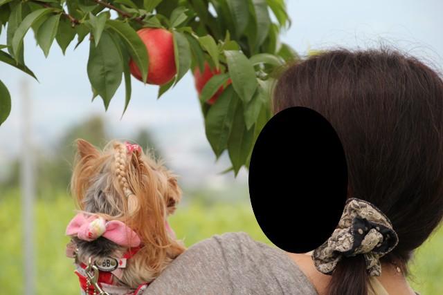 母上大きな桃ですね