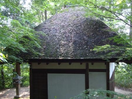 0601_hirokawa2.jpg